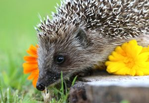 hedgehog-accessories-3870382